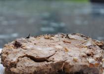 Terrine de foies de volaille